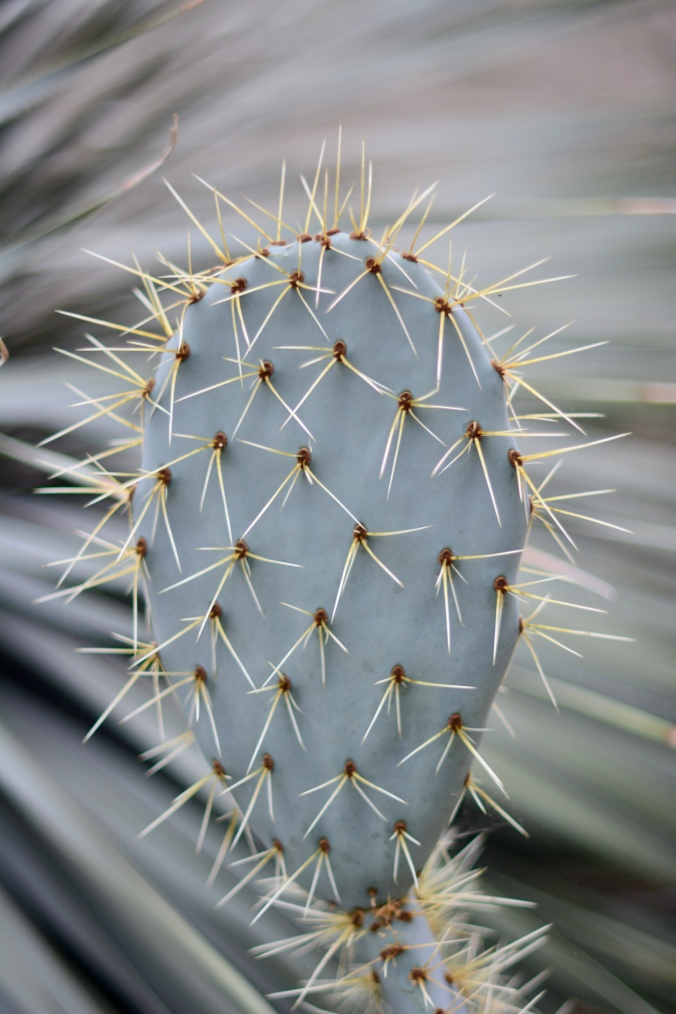 Cactus in the Princess Diana Conservatory