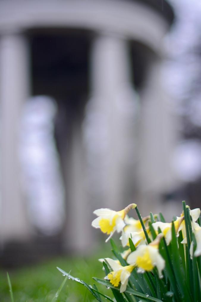 Daffodils in February at Kew