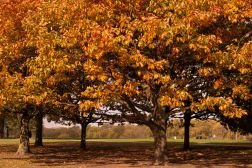 AutumnLeaves16.10
