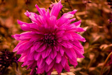 flower1.16.10.4