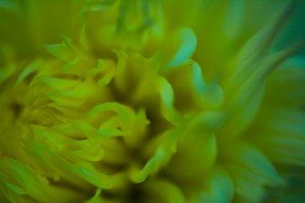 flower3.16.10.4