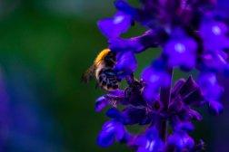 flower6.16.10.4