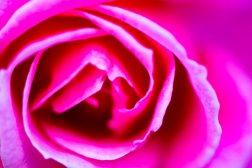 flower8.16.10.4