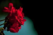flowerinpot