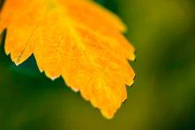 leaf16.10.4