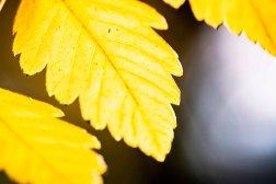 leaf216.10.4