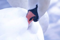Swan16.10.3