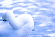 Swan16.10.4