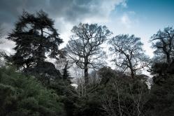 woodlandsceneatkew