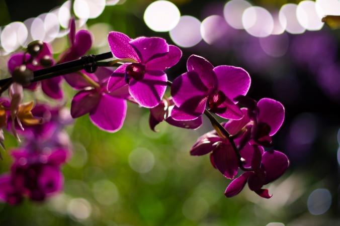 Orchid-at-night-bokeh