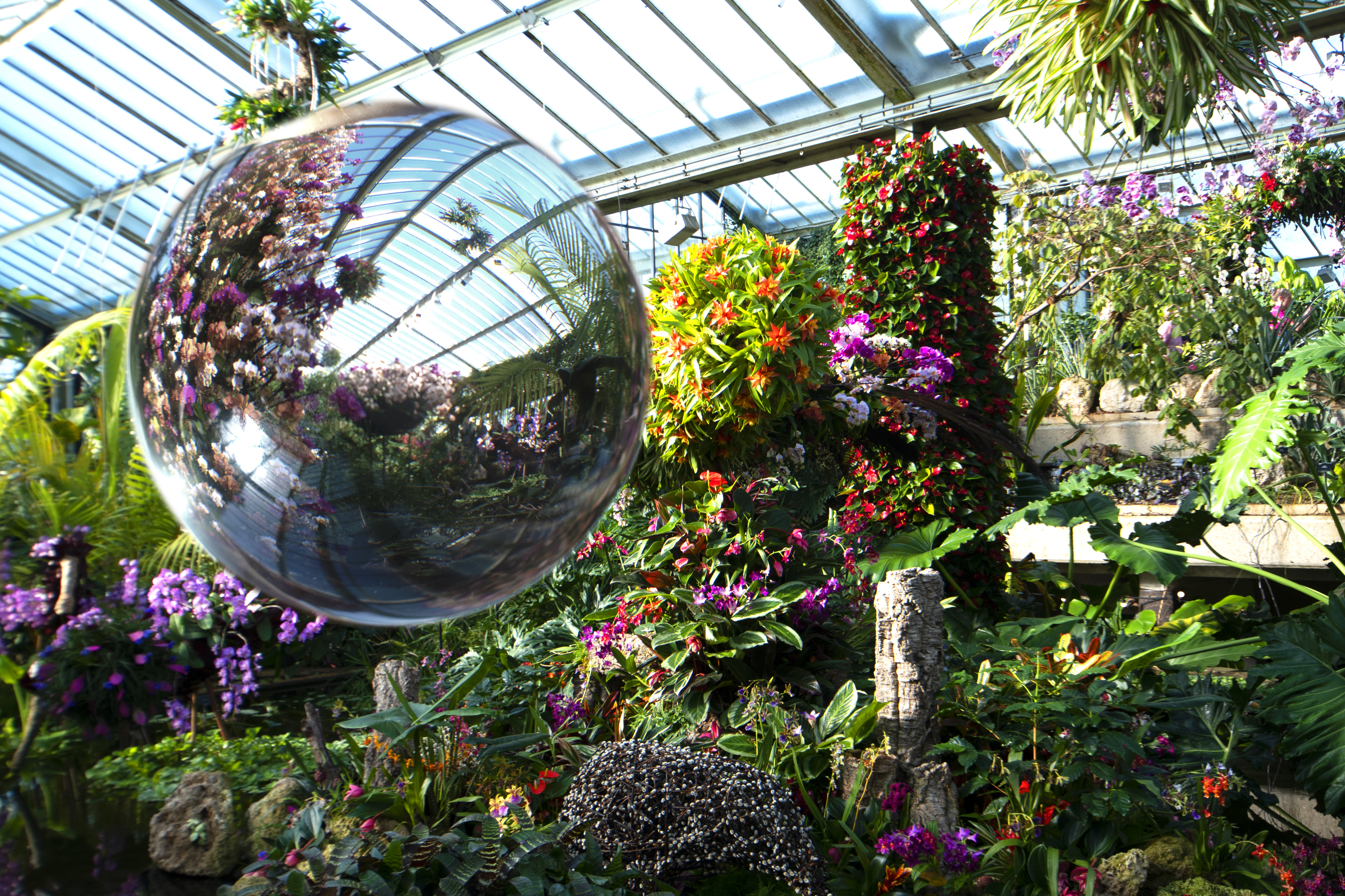 Orchids-with-glass-ball