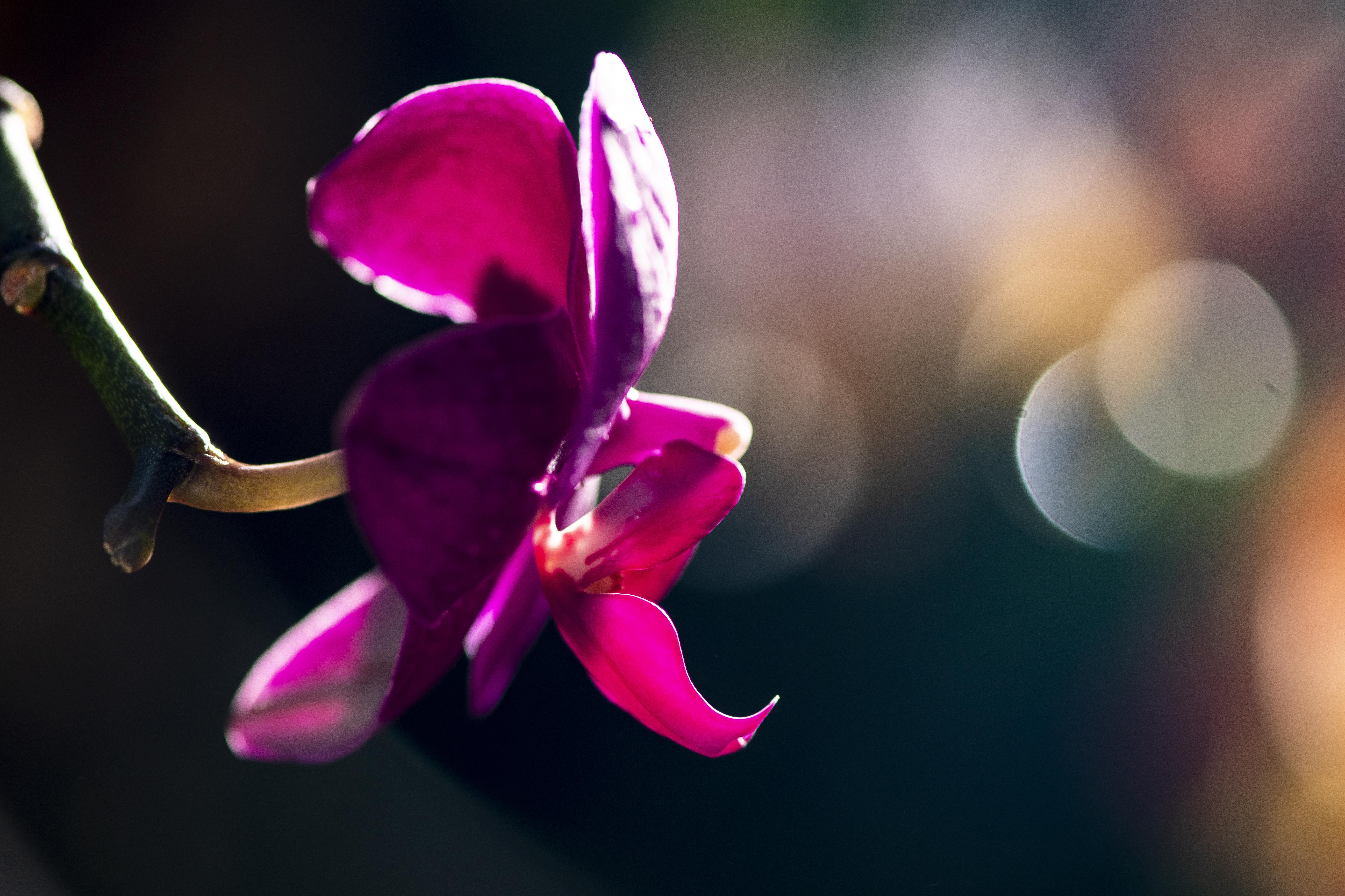 orchids7