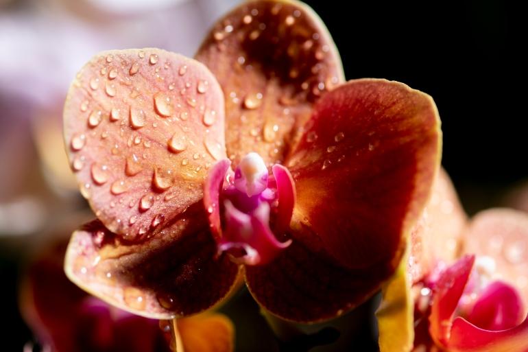 orchids8
